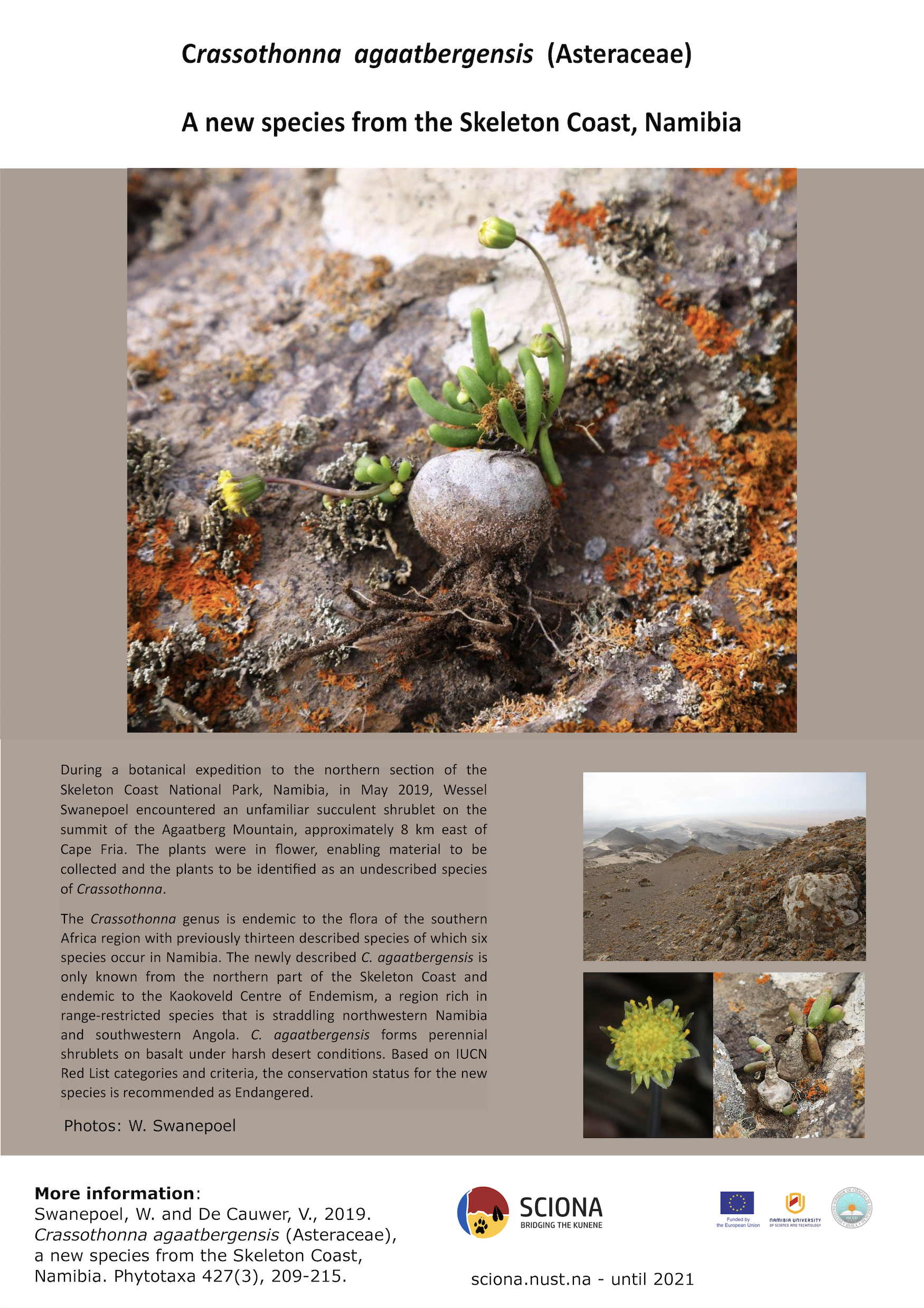 Poster demonstrating new succulent species from the Skeleton Coast, Namibia