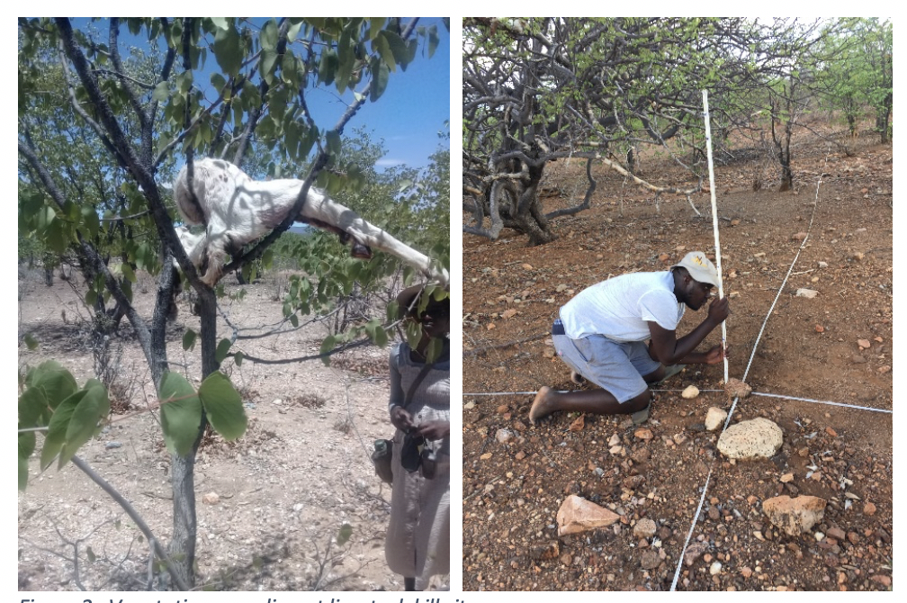 Figure 2.  Vegetation sampling at livestock kill sites.