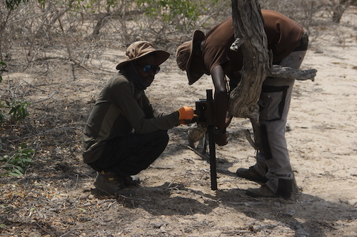 Setting up camera traps in Iona National Park