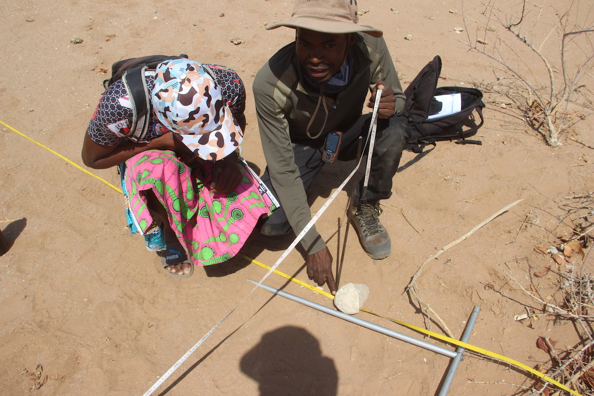 Para ecologist trained how to set up a 10×10m quadrat from the centre point of the plot