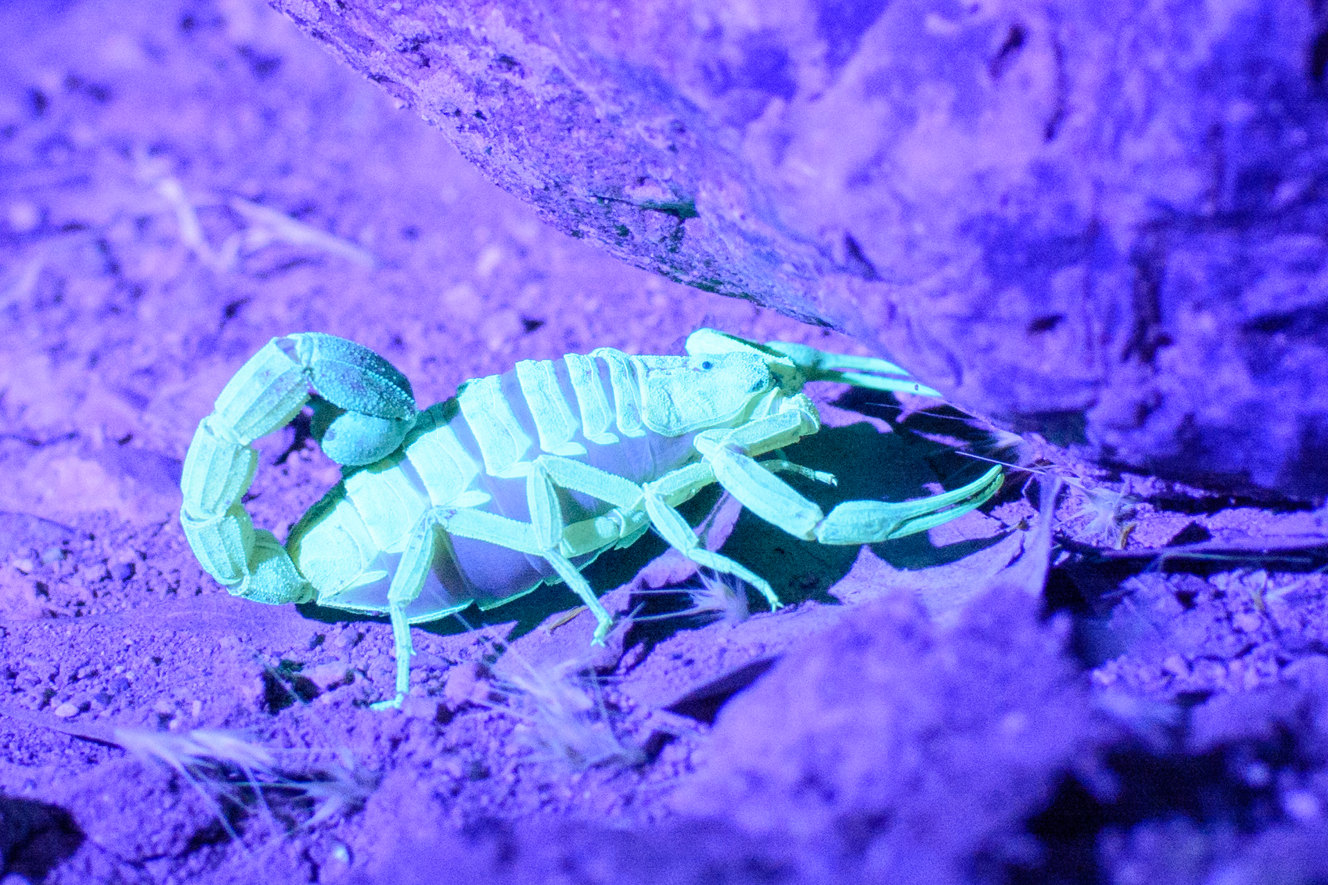 Scorpion, photo credit Alex Derr