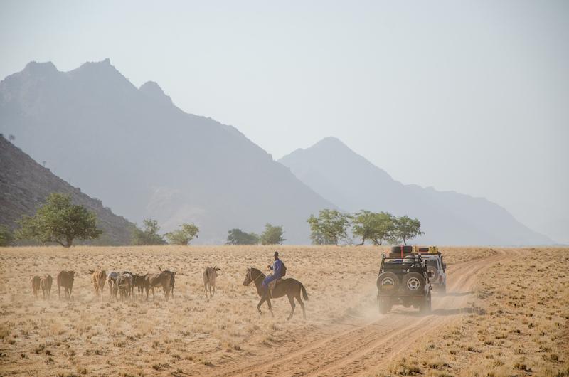 Photo Credit: Morgan Hauptfleisch  Caption: Cars Marien cattle and horses